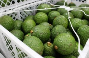 Large Hass avocado to remain scarce amid strong green-skinned demand