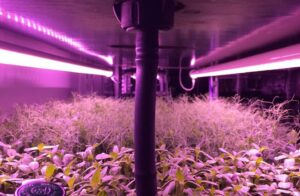 """Shipping containers converted into hydroponic """"farm-in-a-box"""" growing system"""