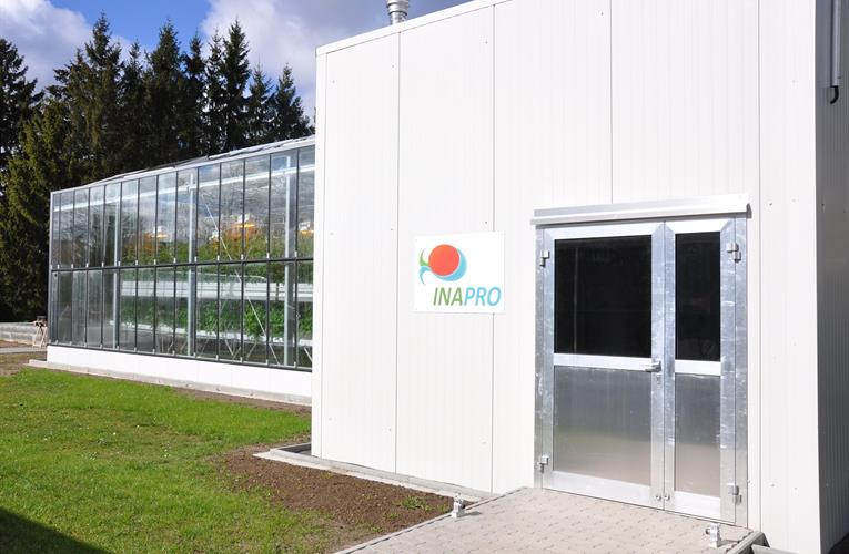 Advanced aquaponic trials likely to reduce tomato footprint