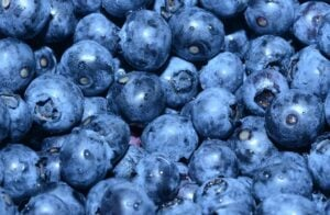 Berry Gardens launches first locally produced British organic blueberries