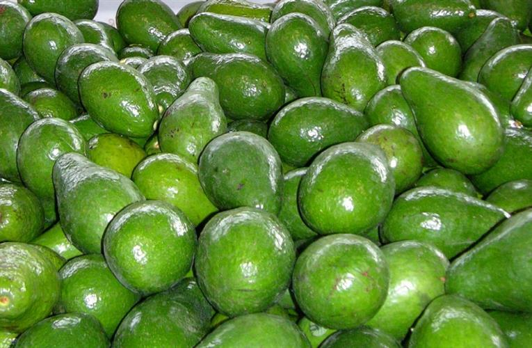 One more amazing selling point for avocados: they are good for the gut