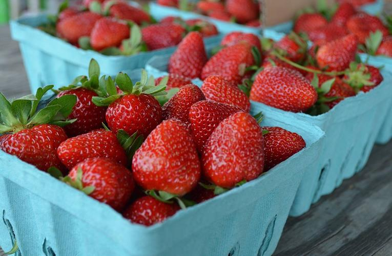 Robot trials aim to cut strawberry harvesting time and control costs