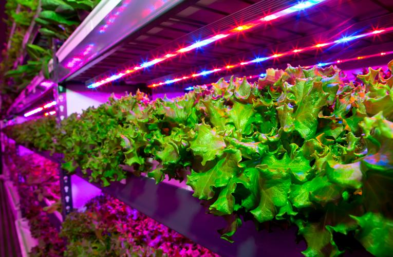 Emirates Airline aims high with vertical facility that provides farm fresh to cabin table