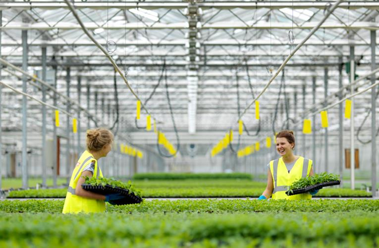 New ways of using herbs tipped to fuel market growth further