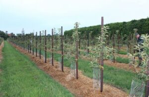 Orchard diversity comes into focus as industry rethinks approach to growing food