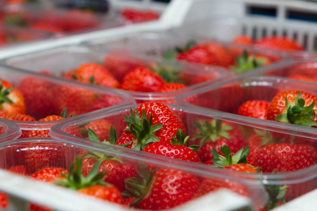 Promising varieties in the pipeline at Scottish berry specialist Angus Soft Fruits